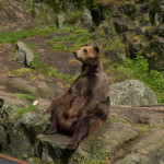 Morfar björn är 17 år och berättigad att sitta i solen och relaxa.