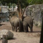 3 elefantrumpor.