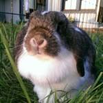 Världens finaste kanin!