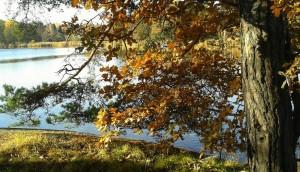 Träd 8
