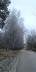 Idag hade de gröna löven fallit och bytts ut mot frost, vacker frost.