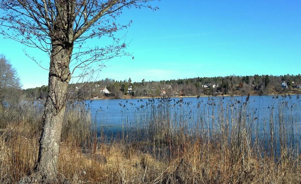 Flaten i mitten av mars. Det ligger en tunn isskorpa där man fortfarande kan se var skridskobanorna plogats fram.