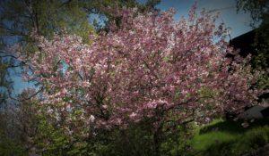 Träd 15
