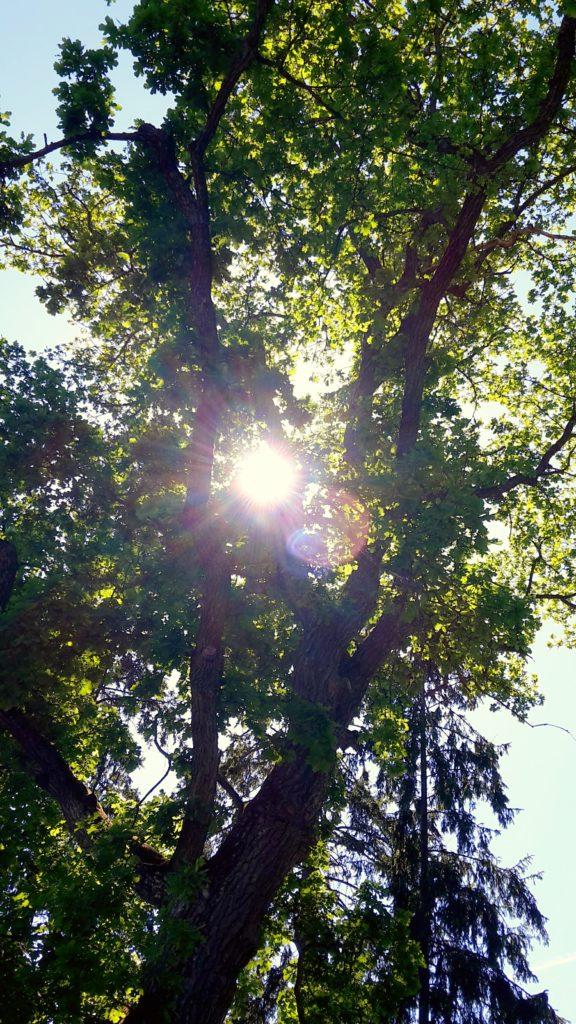 Träd 16