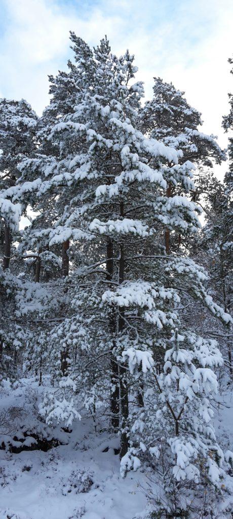Det blå vinterljuset. Jag har inte gjort något annat med bilden utom att beskära den.